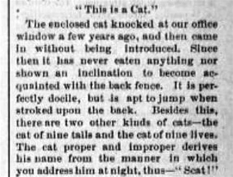 Essay About Cats 1881 humpty dumpty and the featured felines of new york city s cat congress on broadway the