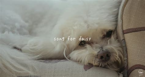 songs for dogs the most calming for dogs created indiebrew net