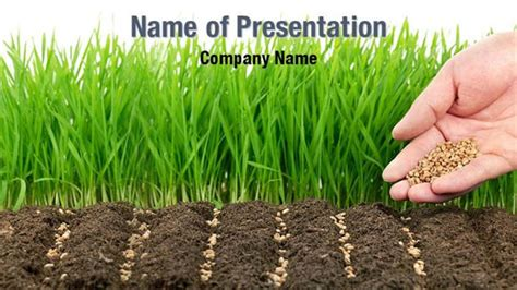 Wheat Seeds Powerpoint Templates Wheat Seeds Powerpoint Backgrounds Templates For Powerpoint Agriculture Powerpoint Templates
