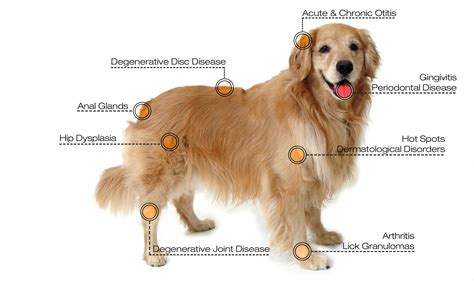 laser for dogs and cat relief laser therapy big creek pet hospital