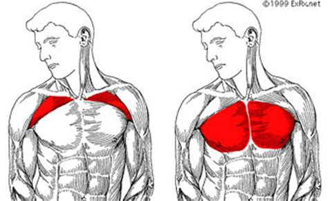 Decline Bench Chest - the 3 best chest exercises for the perfect pec workout