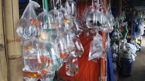 Lu Hias Gantung Di Bandung eksplorasyik pasar ikan hias muara bandung penjaja kata