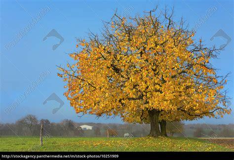 Apfelbaum Hochstamm Kaufen 856 apfelbaum hochstamm kaufen apfelbaum als hochstamm
