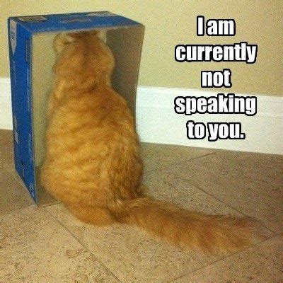 Bad Kitty Meme - funny cat in a bad mood
