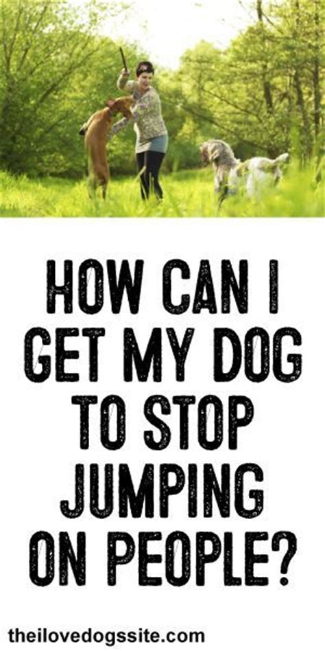 how to stop my puppy jumping on the sofa how can i get my dog to stop jumping on people pet