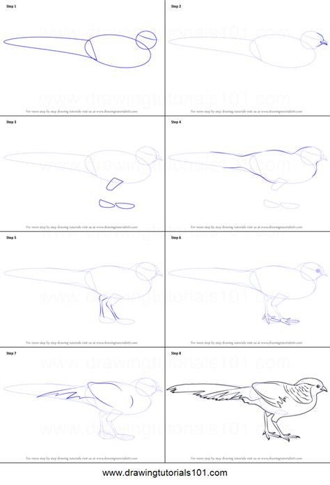 how to a pheasant how to draw a golden pheasant printable step by step drawing sheet