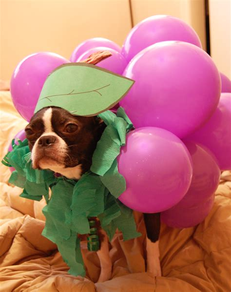 grapes for dogs 9 surprisingly dangerous foods for dogs starting with popcorn rover