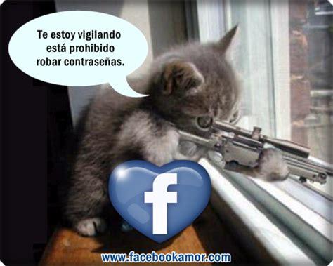 imagenes de animales graciosos para compartir en facebook im 225 genes graciosas de gato im 225 genes bonitas para