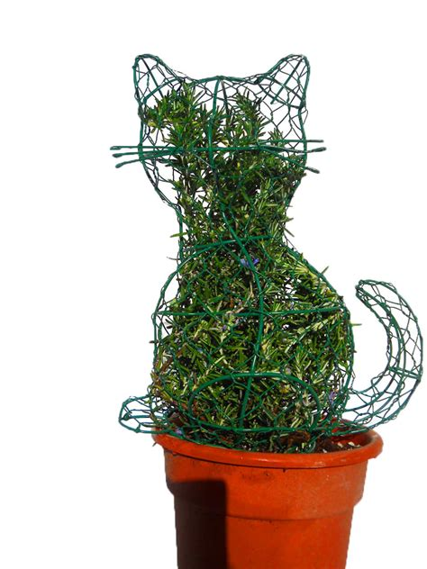 cheap topiaries rosemary topiaries wholesale images