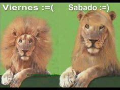 imagenes leones vs magallanes chistosas 1000 images about viernes on pinterest finally friday