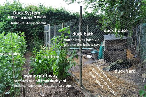 Arizona House Plans ducks in a permaculture system