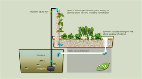 Cheap House Plans To Build aquaponics how to