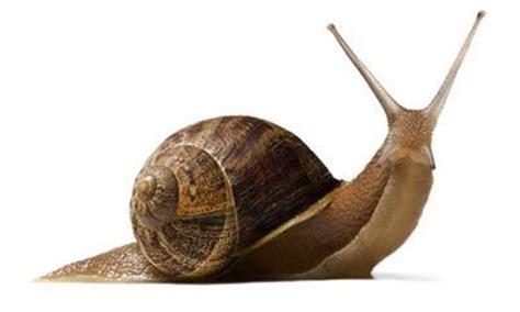 un caracol a snail el caracol que duerme 161 tres a 241 os la vida cotidiana