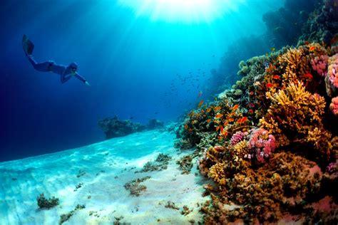 sea ray boats egypt diving egypt