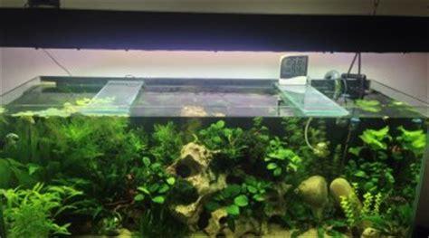 Lu Aquarium Aquascape aquascaping les plus beaux aquariums