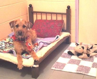 paws bed and biscuit hours and rates