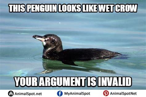 Penguin Memes - penguin memes