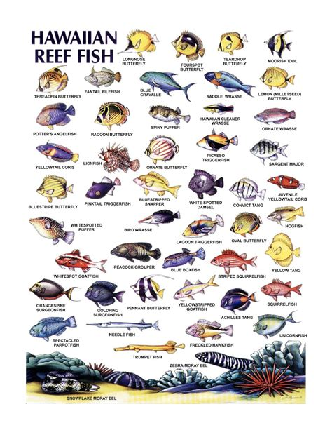 the ultimate guide to hawaiian reef fishes sea turtles image gallery hawaii reef fish