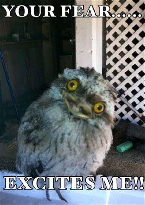 Funny Owl Memes - twist my tweet 20 hilariously adorable owl memes
