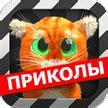 Скачать приложение на андроид говорящего кота