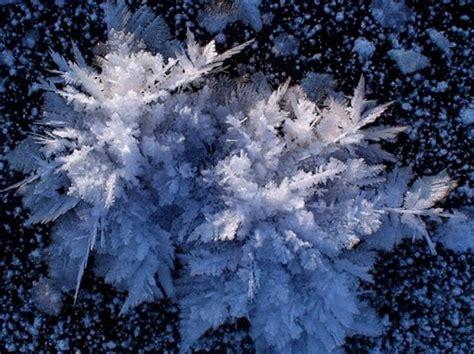fiori di ghiaccio i fiabeschi quot fiori di ghiaccio quot galleggiano sulle