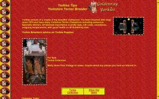goldenray yorkies montgomery county ohio directory and puppies for sale o puppy
