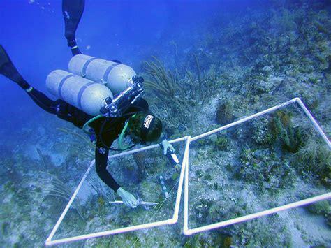 Senter Underwater noaa news story 2916