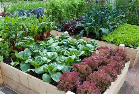 How To Do Organic Vegetable Gardening What You Need To Organic Vegetable Gardening