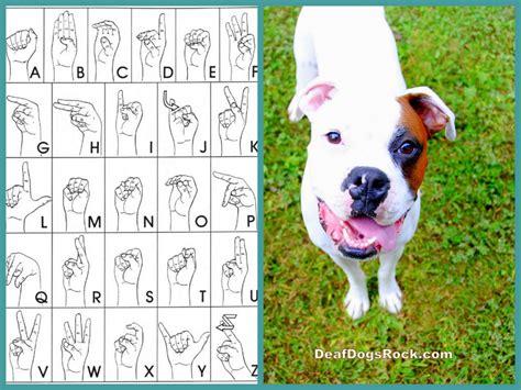 deaf dogs beginning sign deaf dogs rock