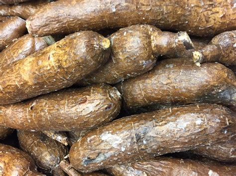 yucca root vegetable root vegetables vegetables intuitive forager