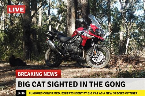 Bmw Motorrad Wollongong by Big Cat Sighted In The Illawarra City Coast Motorcycles
