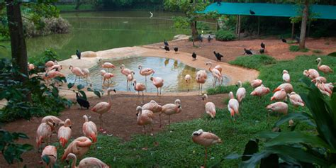 ingresso zoo safari s 227 o paulo crian 231 as interagindo os animais do zoo