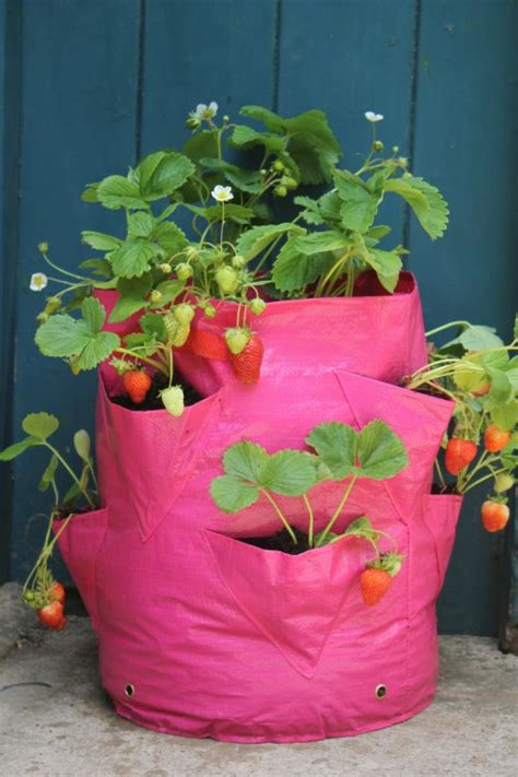 Haxnicks Patio Planters by Strawberry And Herb Patio Planters Archives To Grow