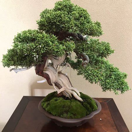 bonsai masterclass all you need to know about creating bonsai from one of the worlds top experts libro para leer ahora shunkaen bonsai museum edogawa 2019 all you need to know before you go with photos