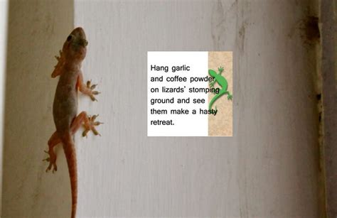 How To Keep Lizards Away From Front Door 16 Easy And Efficient Home Remedies To Get Rid Of Lizards Infestation
