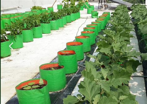 coimbatore hdpe vegetables grow bags maadi thottam