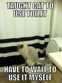 Cat Bathroom Door Meme Teaching A Cat To Use The Toilet Means Waiting Your Turn