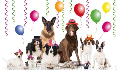 new year animal birthday 20 ways to celebrate national day the dogington post