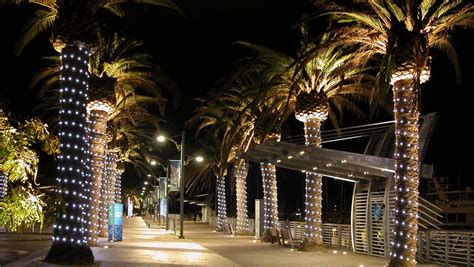 how to light a palm tree palm lighting lighting ideas