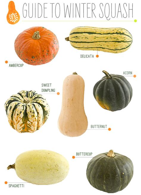 get ready for winter with winter squash find out why