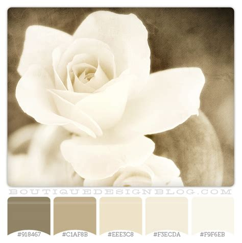 gray and brown color schemes warm vanilla color scheme boutique design studio