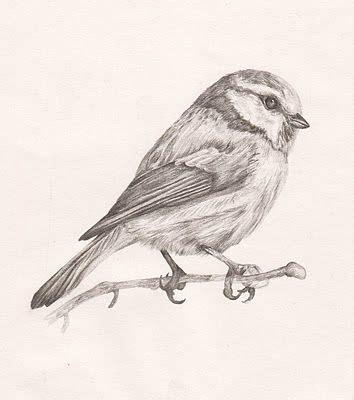libro bird art drawing birds pin von sadie hoechner auf drawing blaumeise v 246 gel und kleine v 246 gel