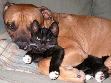 why do dogs like to cuddle itchmo news for dogs cats 187 archive 187 why do dogs always like to cuddle