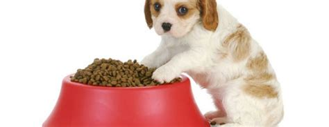 how to wean a puppy weaning puppies learn how and when to wean
