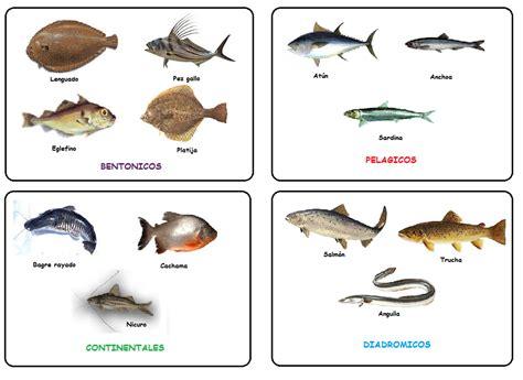 los peces de la 8483835460 dom 201 nica pasi 211 n por la cocina clasificaci 211 n de pescados