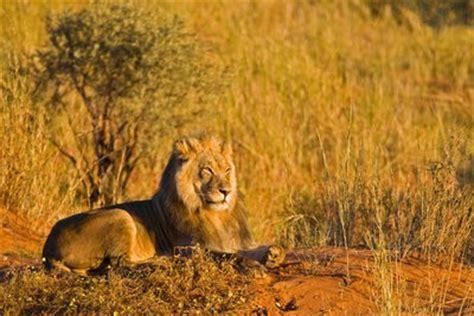 imagenes de paisajes y animales hermosos paisajes con animales