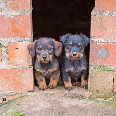 mexican puppy names mexican names spicy names from south of the border