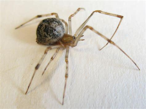 spider house house spider hgtv