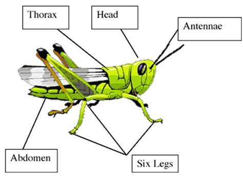 how many body sections do insects have insect and spider differences