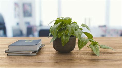 plant on desk how to improve indoor air quality with plants matter of